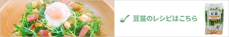 豆苗のレシピ